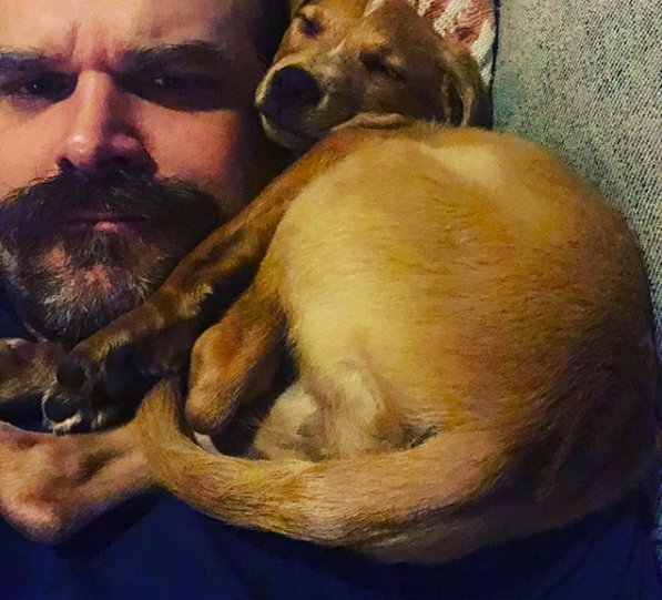 Image of David Harbour with a dog resting on his shoulder